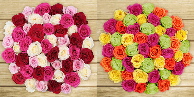 50 Stem Roses For Mother's Day ONLY $39.99 + FREE Shipping (Preorder Now!)