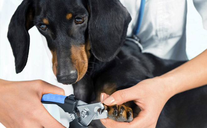 FREE Nail Trim for Dogs at Petco