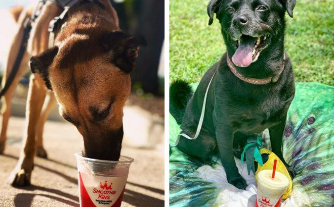 FREE Bark Blends Pup Cup at Smoothie King - Today Only!