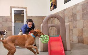 FREE Doggie Day Camp Play Time Event at PetSmart - October 19th (10AM - 4PM!)