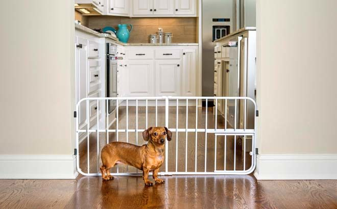 Expandable Gate with Small Pet Door for ONLY $10.30 at Walmart