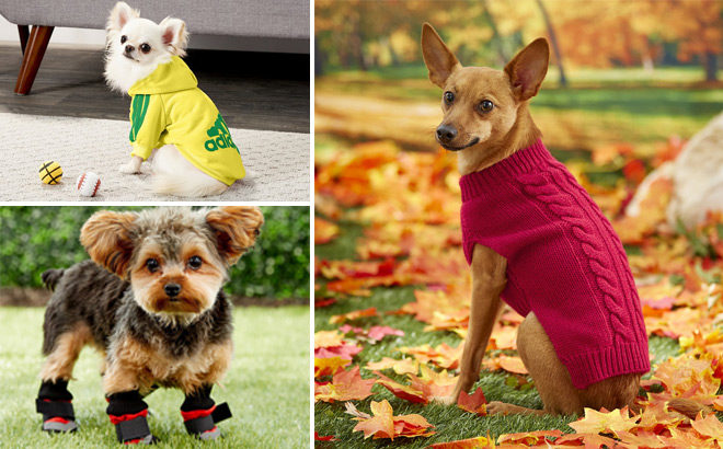 Up to 80% Off Pet Apparel and Accessories at Chewy - Starting at ONLY $1.69