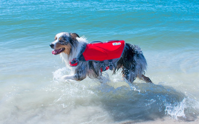 Insulated Dog Life Jacket ONLY $14.45 at Walmart.com (Regularly $36)