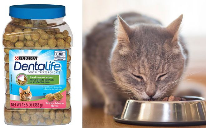 Purina DentaLife Adult Cat Treats ONLY $3.51 at Amazon (Regularly $7.89)