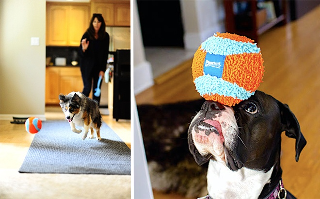 Chuckit! Indoor Ball Dog Toy ONLY $3.51 at Amazon (Reg $10) - Highly Rated!