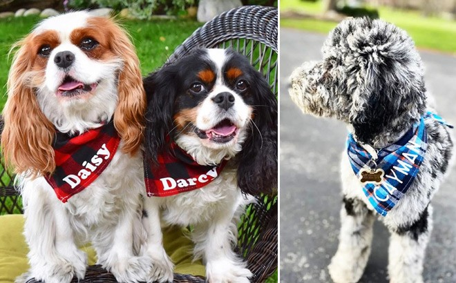 Personalized Dog Bandana for JUST $9.99 + FREE Shipping (Regularly $20) - So Cute!
