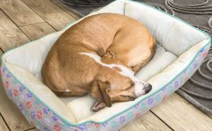 Pet Bed ONLY $13 at Kohl's (Reg $40)